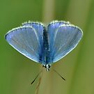 True Blue by Russell Couch