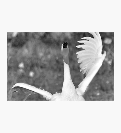 Art of a swan Photographic Print