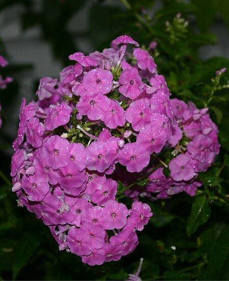 wildflowers von wolf6249107