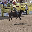 Bull Riding 7 Pikes Peak or Bust Rodeo by hedgie6