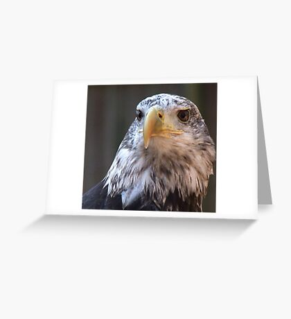 Adler II Greeting Card