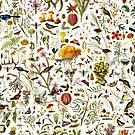 Biology Australia. by Leo Rolph