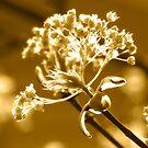 Wonderful Maple Tree Flowers In Gold by hurmerinta