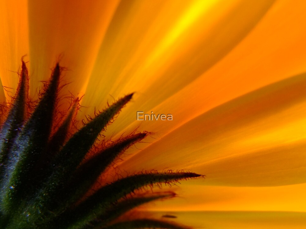 Flaming! by Enivea