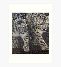 A pair of Snow Leopards Art Print