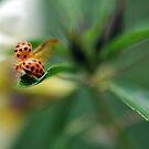 Ladybug  by Jenny Dean