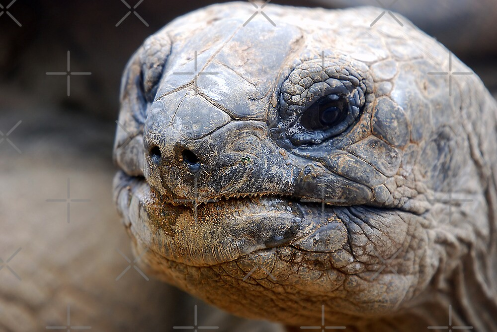 Giant Tortoise....Or ET.....? by Robert Taylor