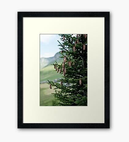branches Framed Print