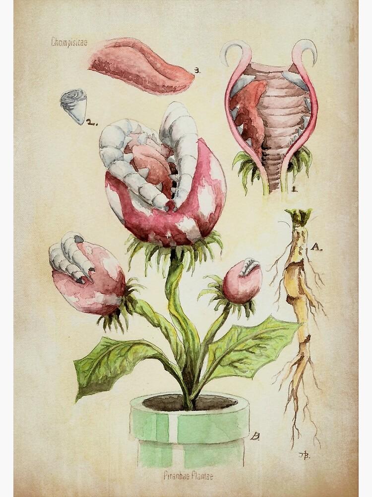 Piranha Plant Botanical Illustration by 84Nerd