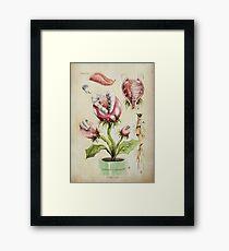 Piranha Plant Botanical Illustration Framed Print