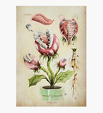 Piranha Plant Botanical Illustration Photographic Print