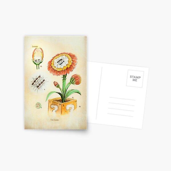 Fire Flower Botanical Illustration Postcard