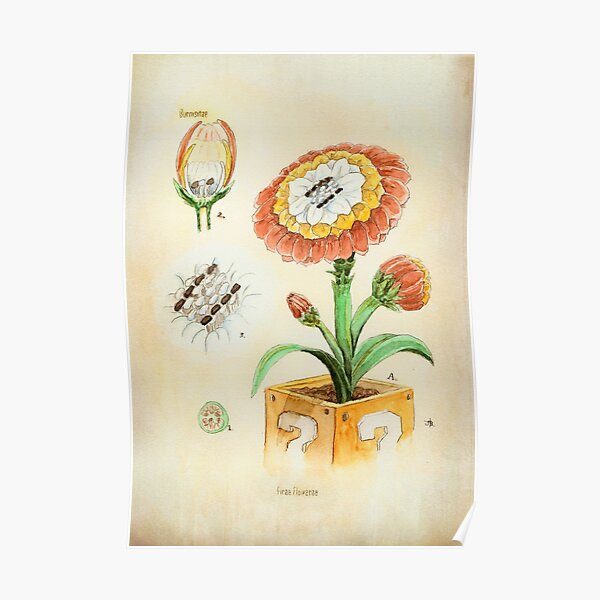Fire Flower Botanical Illustration Poster