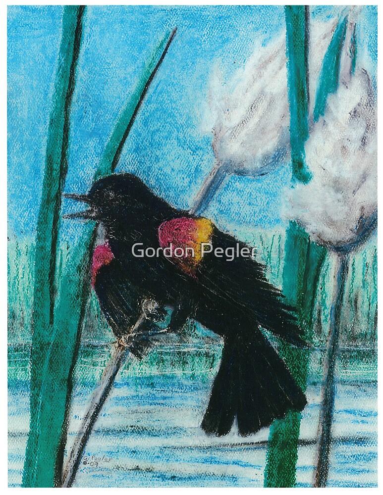 Red Wing Black Bird - Oil Pastel by Gordon Pegler
