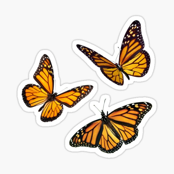 pack d'autocollants papillon monarque orange Sticker