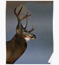 Majestic Buck Poster