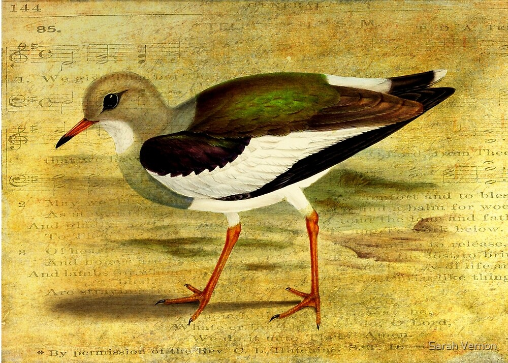 'Like a Lapwing' by Sarah Vernon
