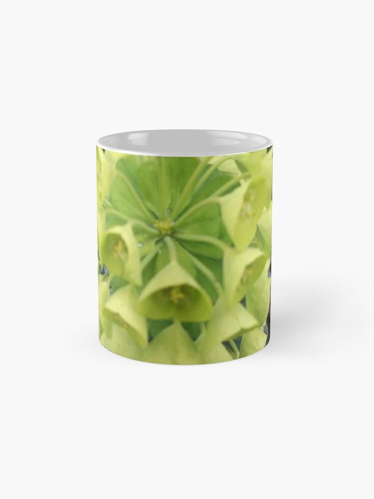 Alternative Ansicht von Euphorbia. Tassen