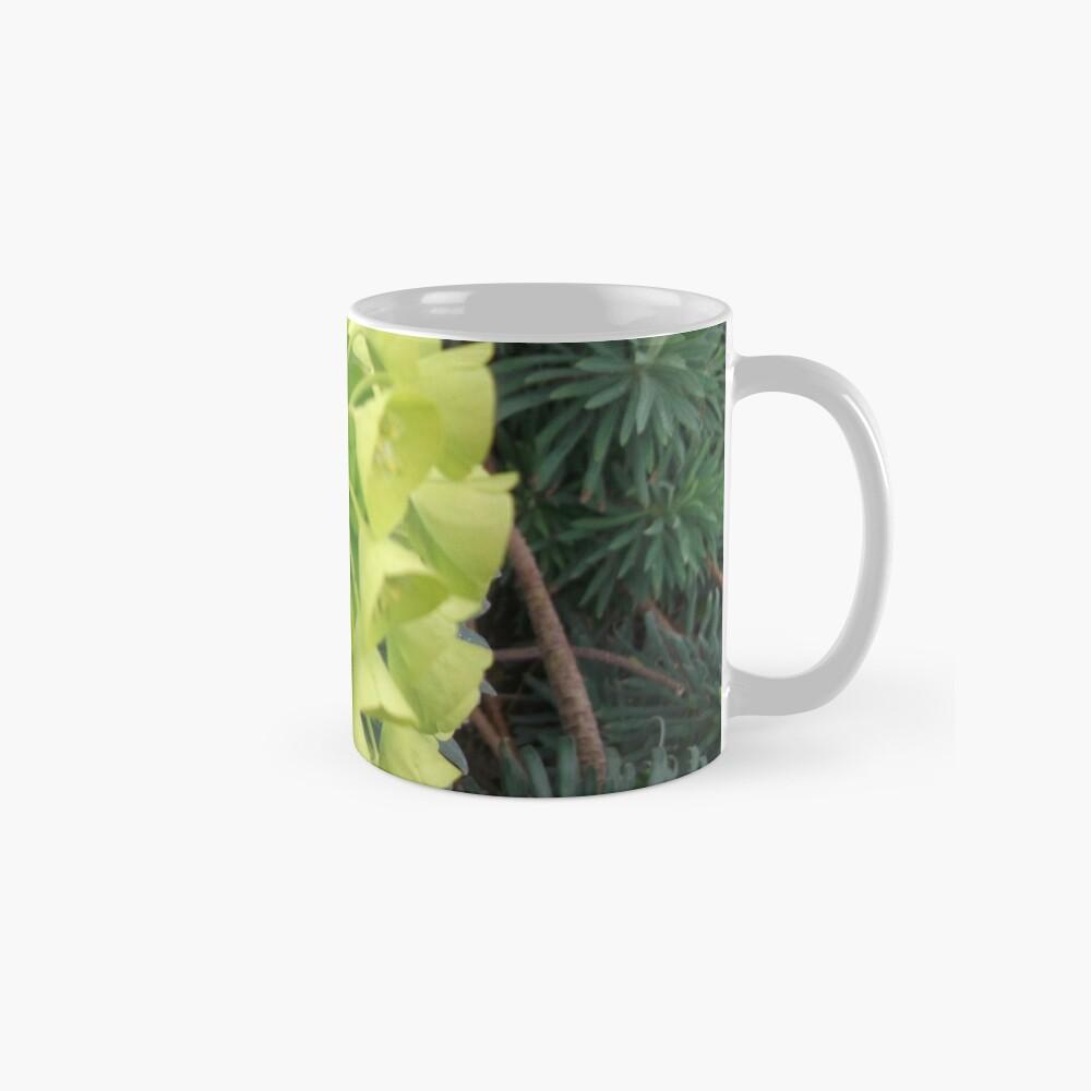 Euphorbia. Tassen