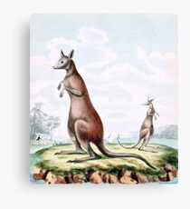 Kangaroos Vintage Drawing Canvas Print