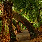 Tarra Valley Archway by Jason Green
