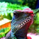 Chinese Water Dragon.. by eithnemythen