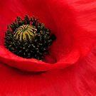 Poppy by Robin Nellist