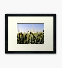 A Bumper Crop Framed Print