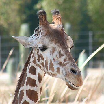 Giraffe by Misawalk