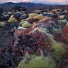 Ngauruhoe Sunset by Paul Mercer