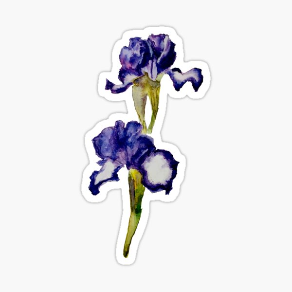 Bearded Iris 'Going My Way' Sticker