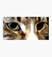 brand new eyes. Photographic Print