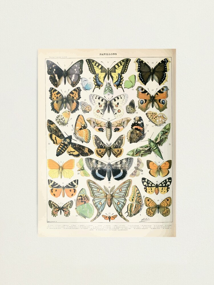 Alternate view of Adolphe Millot papillons A Photographic Print