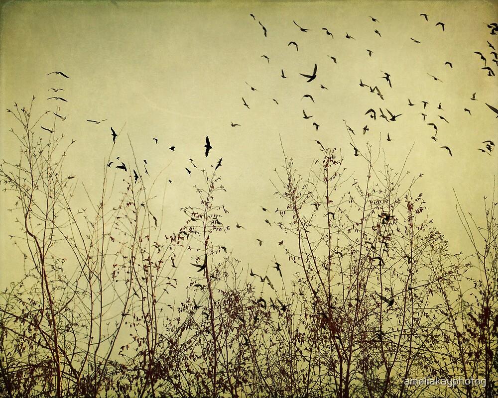 Fly Away by ameliakayphotog