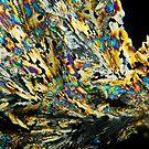 2010_2010-08-03-4823-Edit_RB by owensdp1277