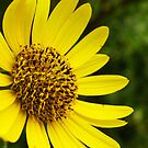 Yellow Glow by Susan Blevins