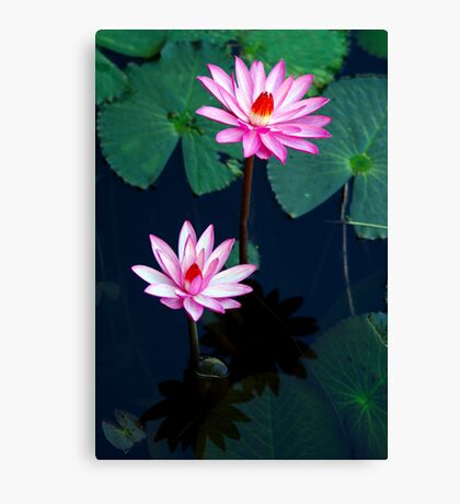 Two of a kind - pink waterlillies Canvas Print