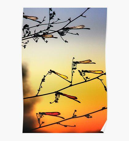 Sunset Dragonflies Poster