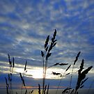 Cornwall: Grasses and the Evening Sky by Rob Parsons