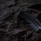 Feather in the Woods - Ketchikan, Alaska by Lindsey Butler