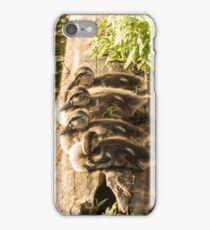 4 Little Ducklings on a log iPhone Case/Skin