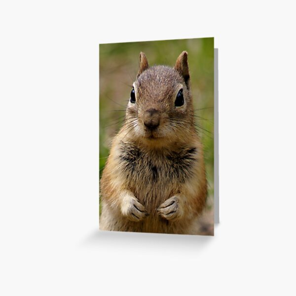 You Have His Attention Greeting Card