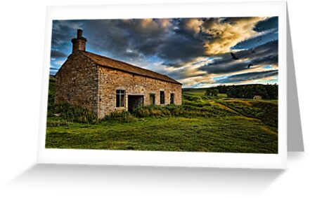 Home to Roost - Weardale. UK by David Lewins
