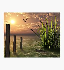 Bull rushes Photographic Print