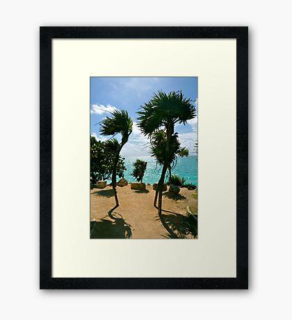 Breezy Palms Framed Print