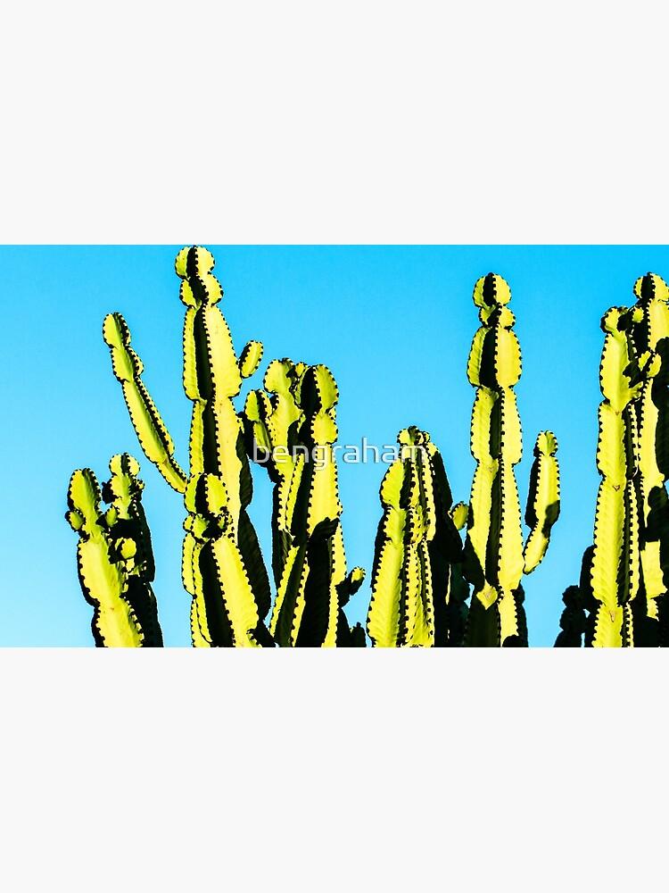 Kaktus von bengraham