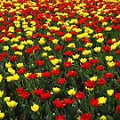 Tulips by Lee d'Entremont