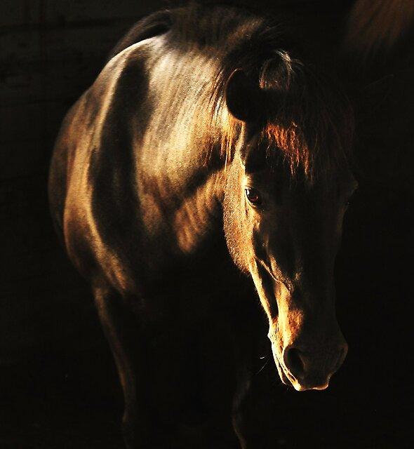 Sunshine in the dark by Alan Mattison