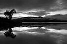 B&W Morning by Michael Treloar