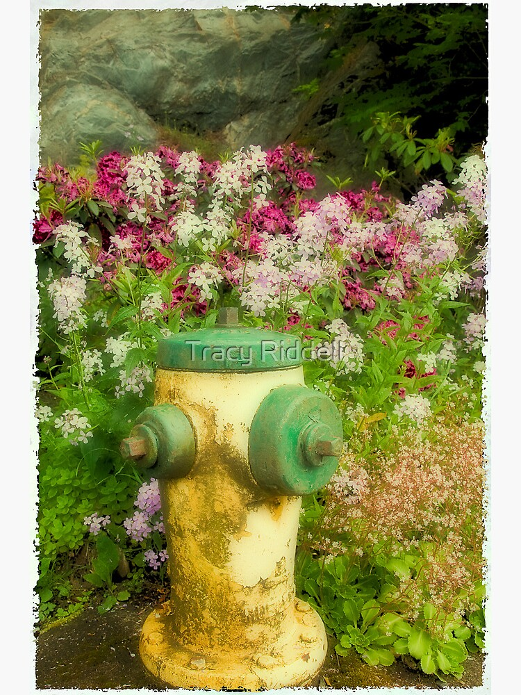 Flower Hydrant by taos